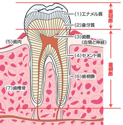歯に穴がある